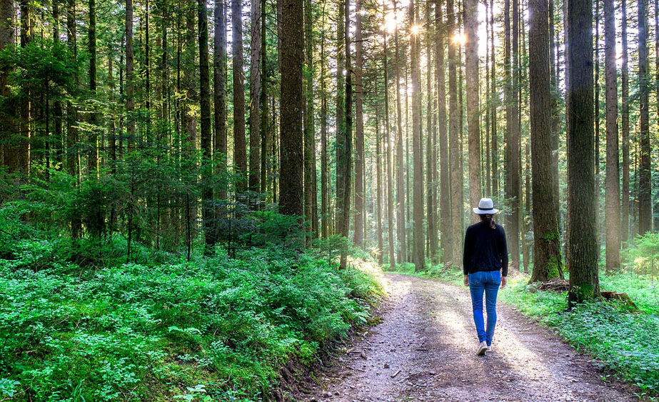 meditazione camminata nel bosco