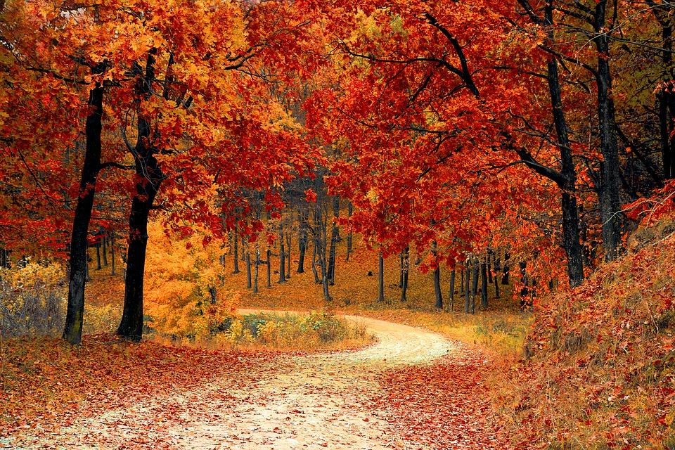 passeggiata nella natura halloween