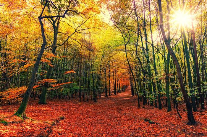 autunno bagno nella foresta