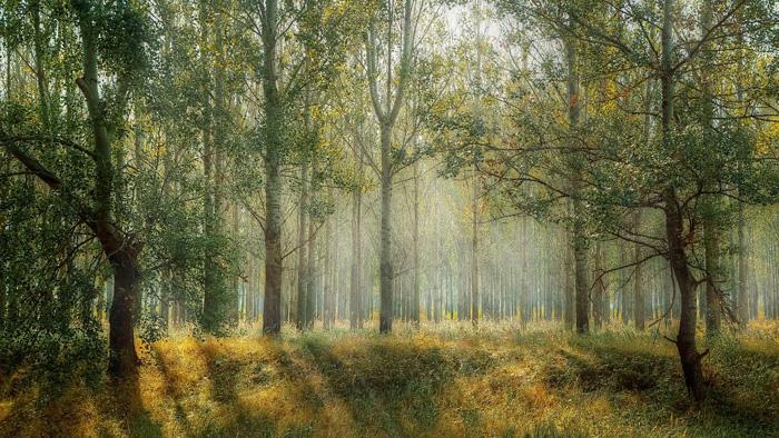 foresta